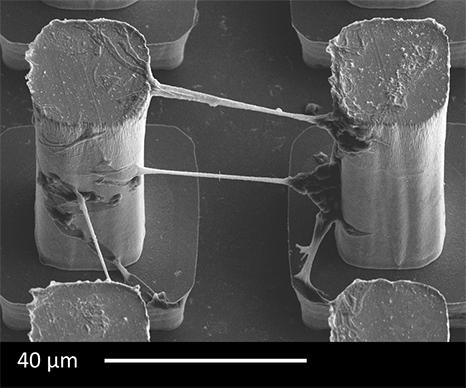 neurons-grown.jpg